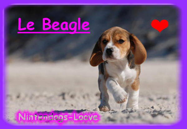 Le Beagle !
