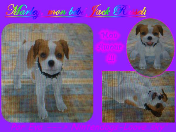 Marley : Jack Russell Terrier !