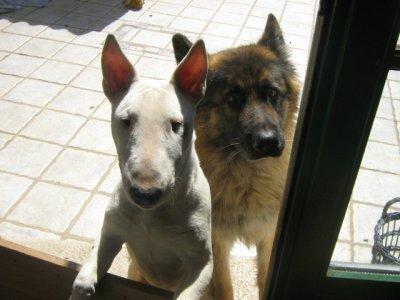 Elfira et Buck