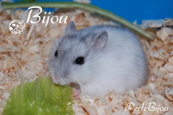 Présentation de Bijou