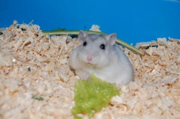 Bijou et la salade, une grand histoire d'amour commence x)