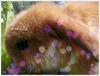 slmt 2 photos récentes de Yuno et Lucky, ils vont bien :-)