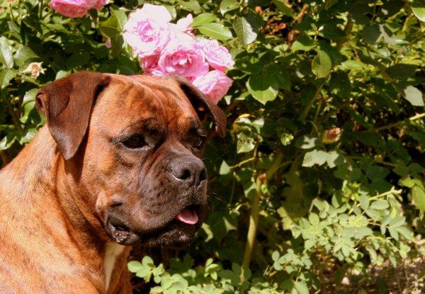 """""""Le chien à l'incroyable capacité de deviner nos pensées et nos sentiments"""""""