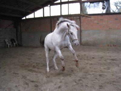 Equitation !