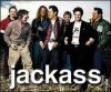 The-Jackass-fan