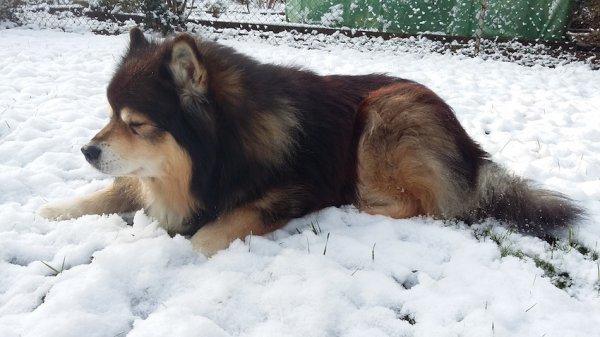 Un tapis de neige + un peu de soleil = un p'tit somme