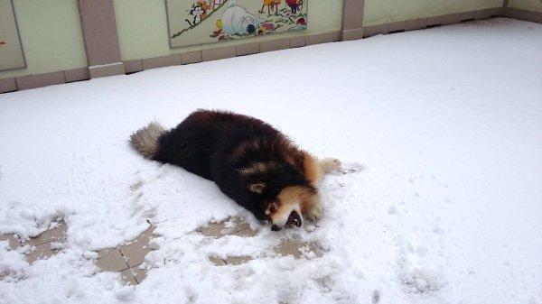 Jour de neige, les persans nettoient les tapis