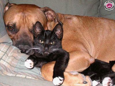 ~~Le chien et  le chat~~