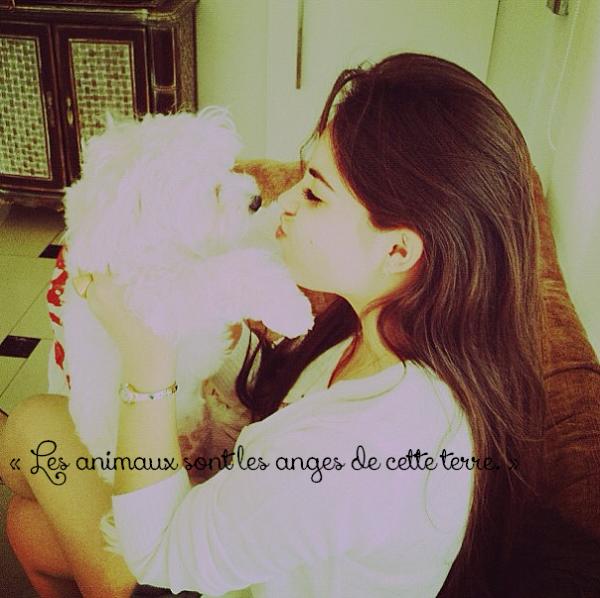 « Les animaux traitent mieux les blessés que les hommes. »