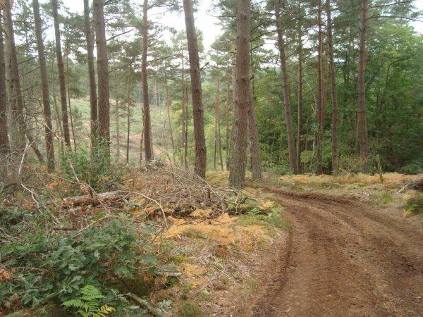 Off Road Granitic Morvan