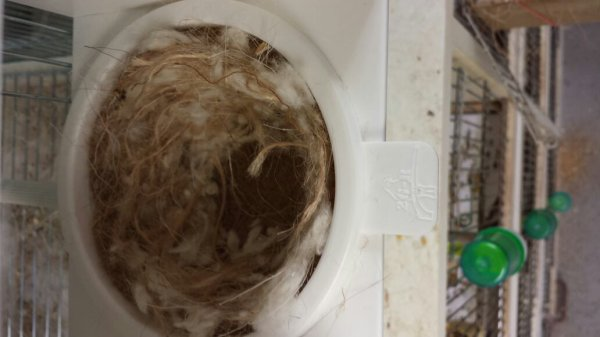 Debut des premiers nids