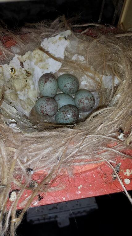 Dernier nid pour cette saison apres repo