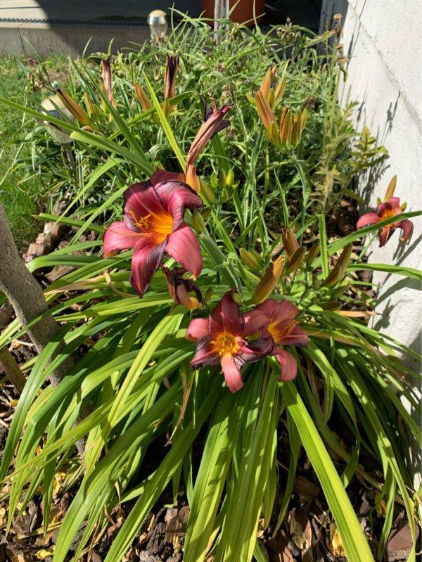 Fleurs jardin d'été