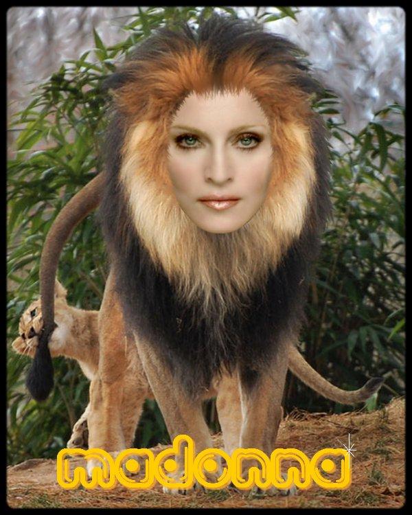 Madonna the Lion