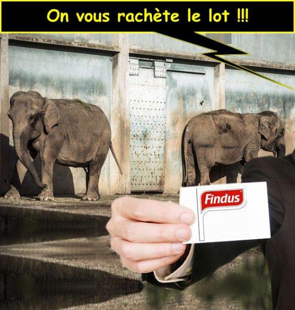 "Spécial ""FINDUS & LA MALBOUFFE"" - Image n° 2/5 !..."