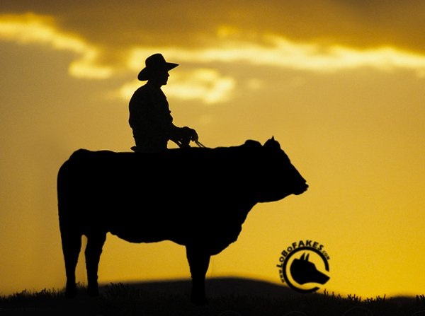 "Spécial ""A POOR LONESOME COWBOY"" - Image n° 2/2 !..."