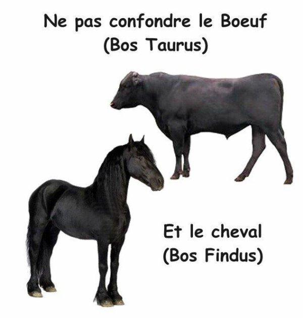 "Spécial ""B¼UF VS CHEVAL"" !..."