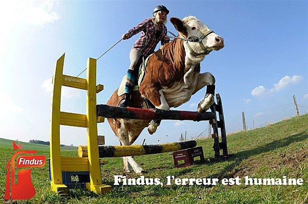"""Spécial """"FINDUS & LA VIANDE DE CHEVAL - Photo n° 09/12 """" !..."""