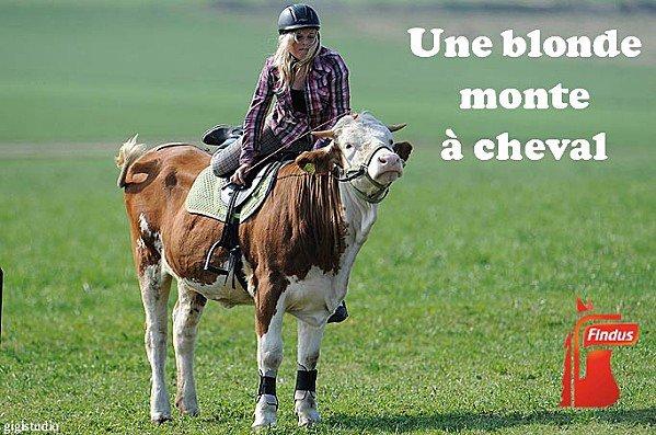 """Spécial """"FINDUS & LA VIANDE DE CHEVAL - Photo n° 08/12 """" !..."""