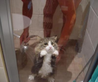 Chat Furieux chat furieux ! - le blog des images drÔles, insolites,