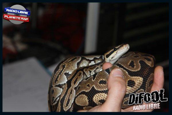 Radio Libre | Les serpents dans le studio !
