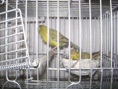 Cria 2010