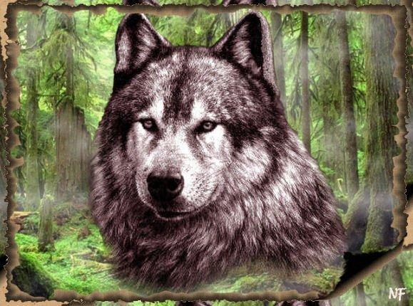 tite louve