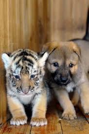 Blog de cat-tiger