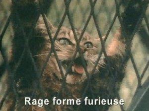 le chat à la rage