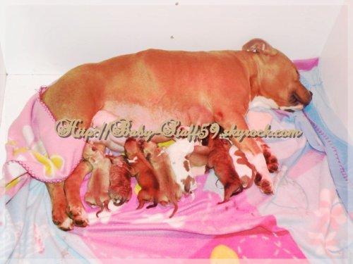 C'Prisca avec ses chiots à la naissance