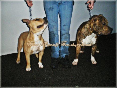 Faya-Bella et Fire-Blade dans leurs 10ème mois