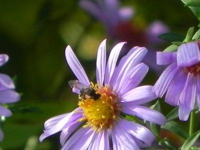 Dernières photos du jardin