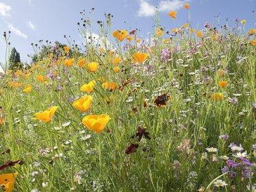 Les prairies fleuries sont à la mode !