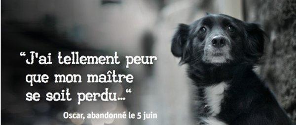 Les animaux sont aux c½urs de ces citations ♥
