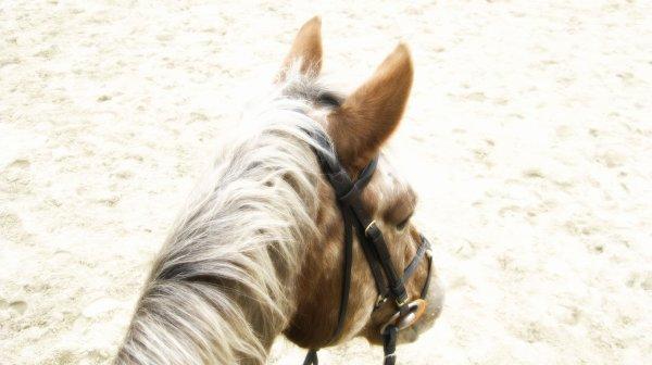 ~L'air du Paradis est celui qui souffle entre les oreilles d'un cheval~