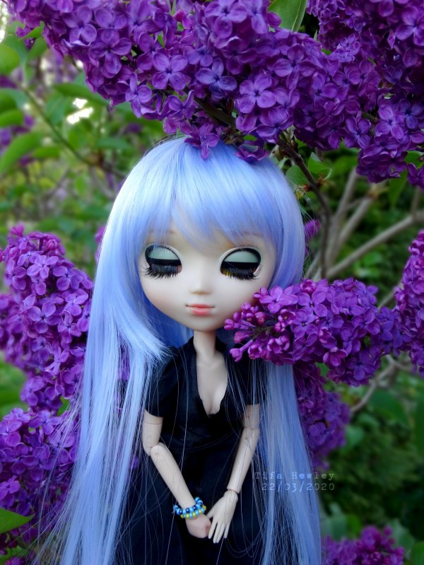 The First ☆ Lilas - Pullip Xiao Fan