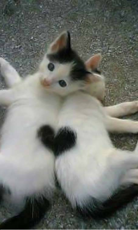mes chat =3