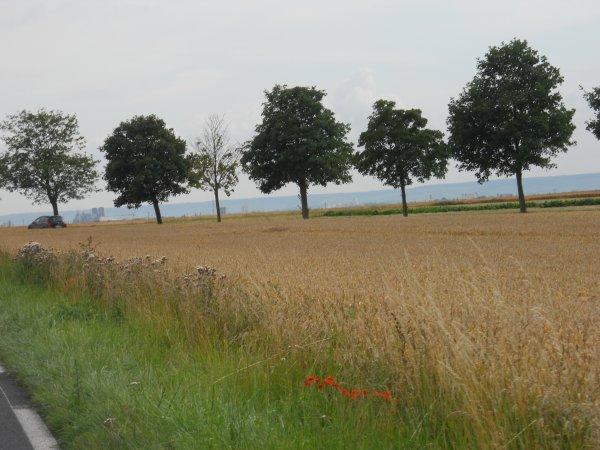 Tour de France 2012, étape 1 : Douvrain - Reims