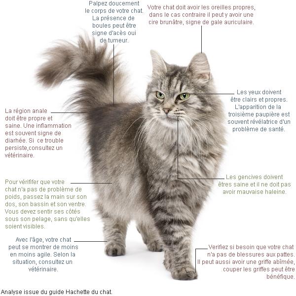 Un chat en bonne santé.
