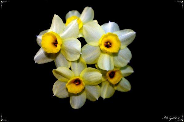 Autre fleurs
