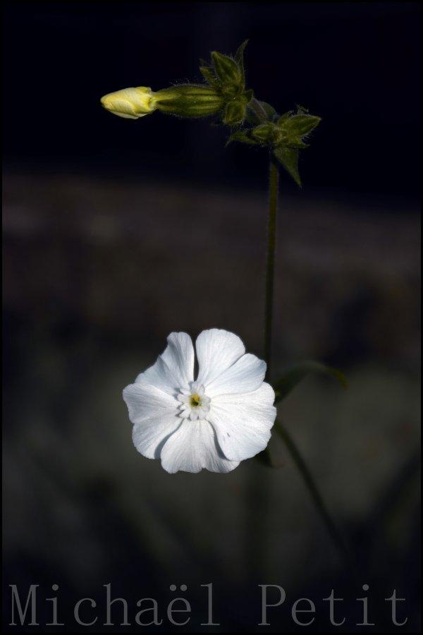 Fleur ds le jardin