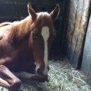 Photo de horse-love2