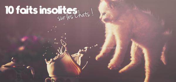 10 faits insolites sur les chats !