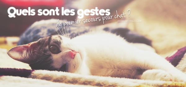 Quels sont les gestes de premier secours pour chat ?