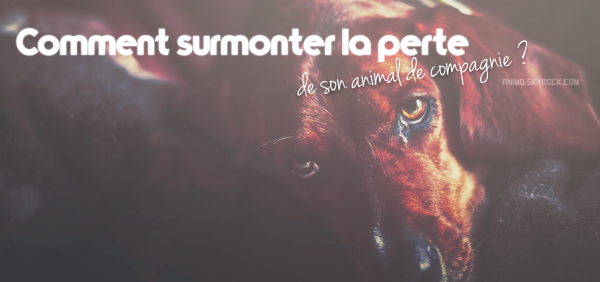 Comment surmonter la perte de son animal de compagnie ?