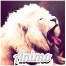 Photo de Animo