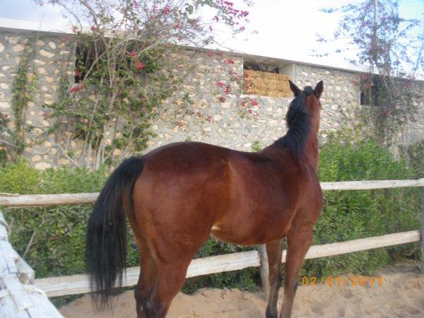 mon chevale