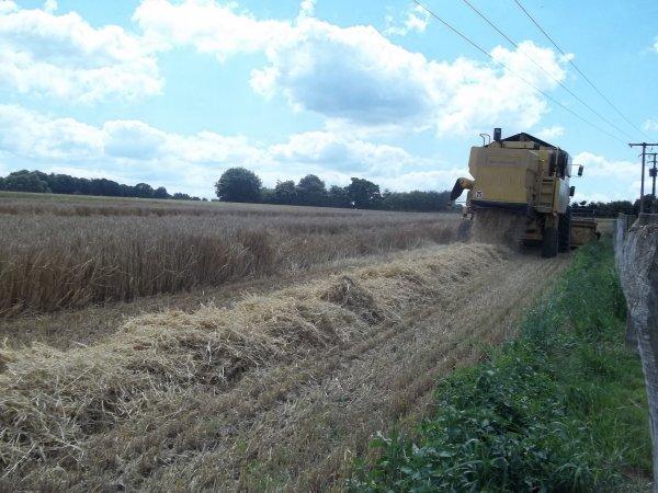 Moisson de l'orge 2011 ---> New-Holland Tx 34
