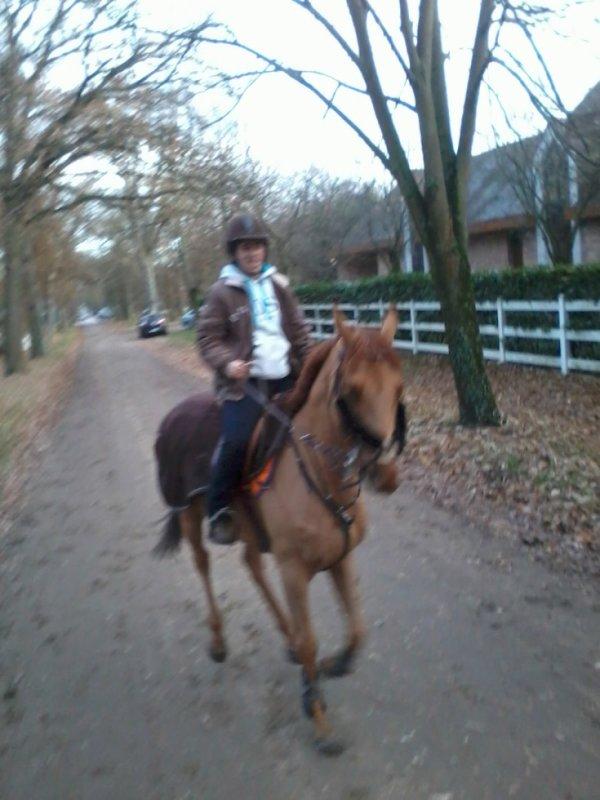 mon cheval en plain dans sont tripe