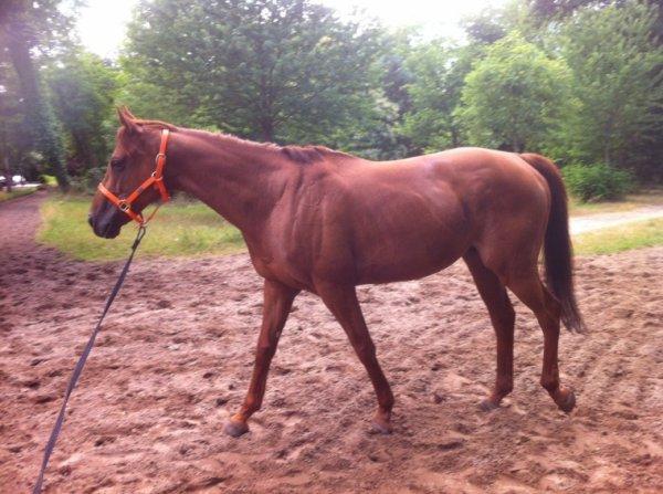 Des nouvelle de mon petit cheval